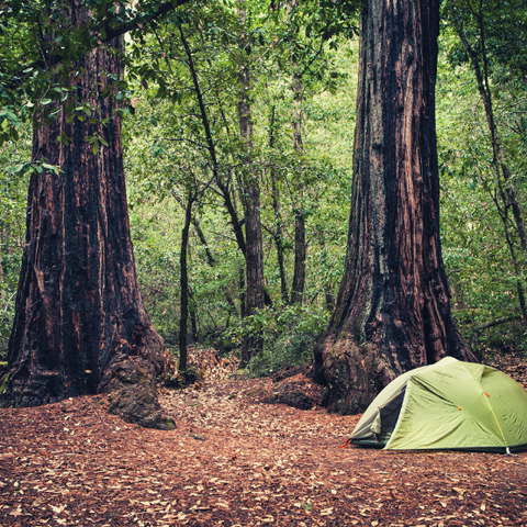 A tent in the Redwoods in Big Basin National Park