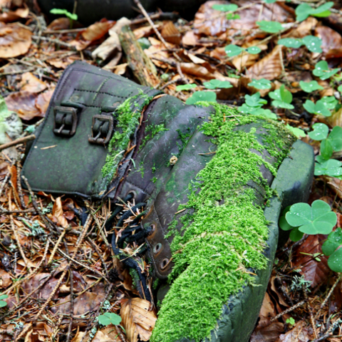A boot covered in moss in the forest