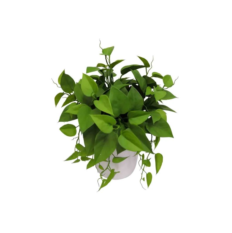 Leaves in White Plastic Pot 35cm