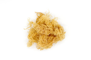 1kg Gold St Lucia Sea Moss - Eucheuma Cottonii - St Lucia Sea Moss Organic Buy UK