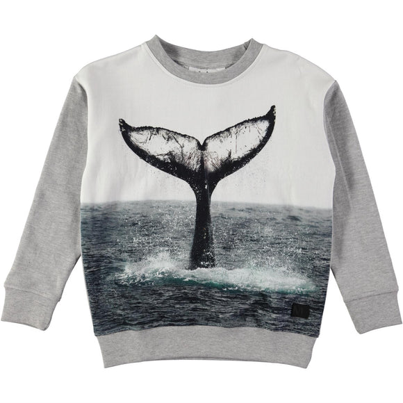 Designer Kids Fashion at Bloom Moda Online Children's Boutique - Molo Morell Whale Tail Sweatshirt,  Shirt