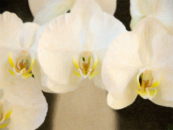 Tripple Orchid