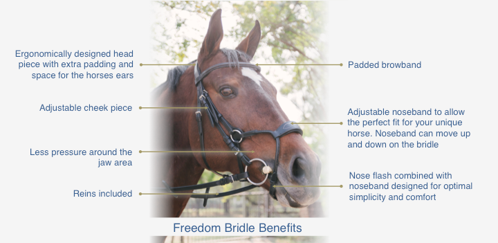 buy Freedom Bridle South Africa
