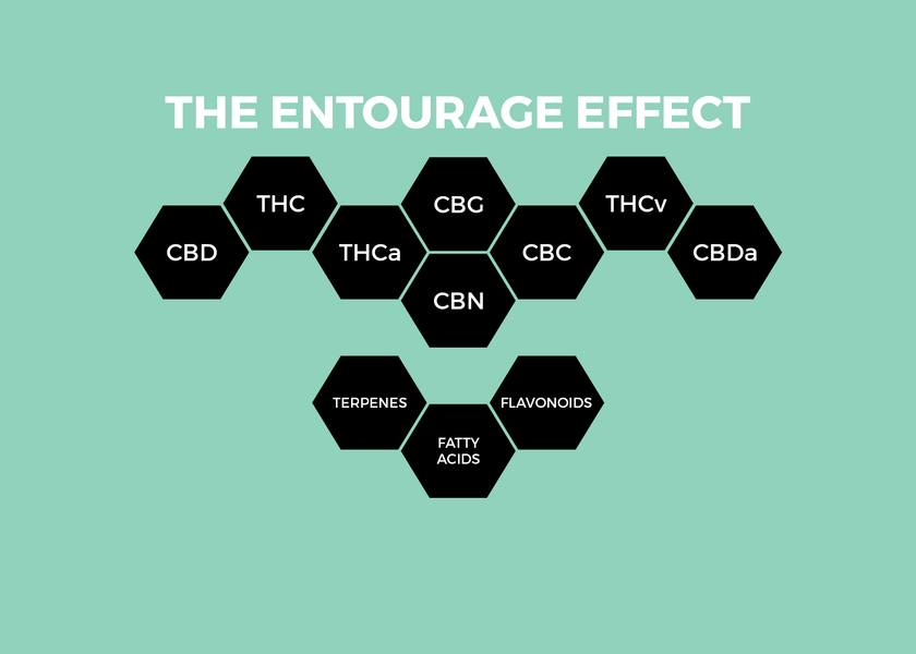 What Exactly is the CBD Entourage Effect?