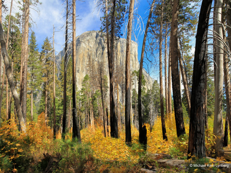 Yosemite National Park Art Beauty from Ashes - Gallery-by-the-Sea Carmel