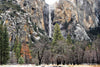 Bridalveil Falls Trees - Gallery-by-the-Sea Carmel