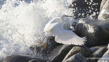 Egret Rocks - Gallery-by-the-Sea Carmel