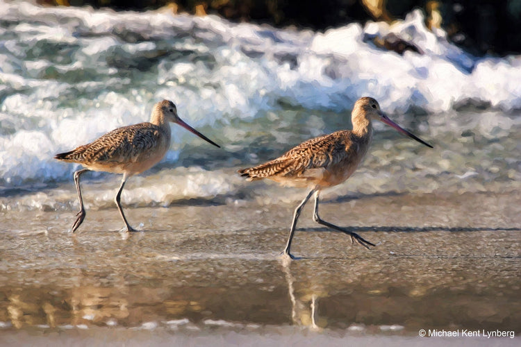 Marbled Godwits - Gallery-by-the-Sea Carmel