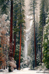 Yosemite Falls - Gallery-by-the-Sea Carmel