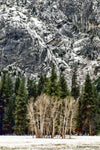 Yosemite Trees - Gallery-by-the-Sea Carmel
