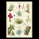 Air Plants Poster Wrap-2D-Cavallini & Co.-PaxtonGate