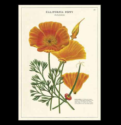 California Poppy Poster Wrap-Paxton Gate-PaxtonGate