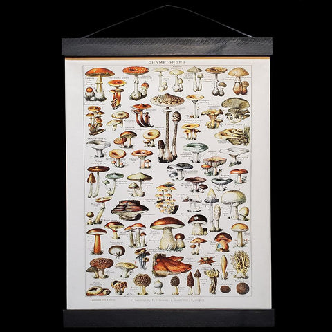 French Mushrooms Hanging Canvas Chart-2D-Curious Prints-PaxtonGate
