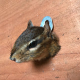 Chipmunk Taxidermy Head Mount-Taxidermy-Thunder Bay Taxidermy-PaxtonGate