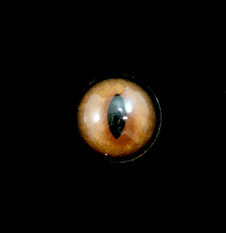 Glass Fox Taxidermy Eye-Taxidermy-McKenzie Taxidermy Supply-PaxtonGate