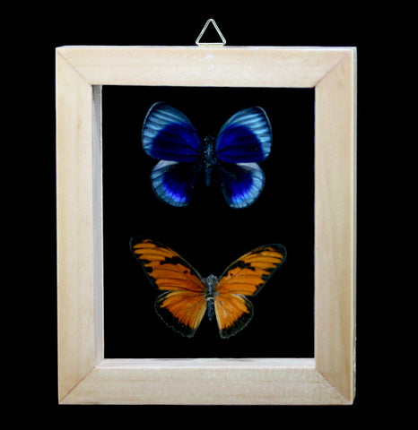 Double Glass Framed Peruvian Butterfly Pair-Insects-Butterflies By God-PaxtonGate