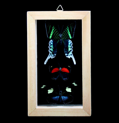 Three Double Glass Framed Peruvian Butterflies-Insects-Butterflies By God-PaxtonGate
