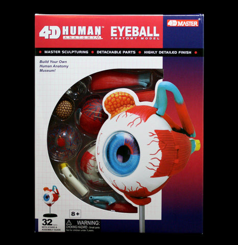 4D vision Human Eyeball Model - PaxtonGate