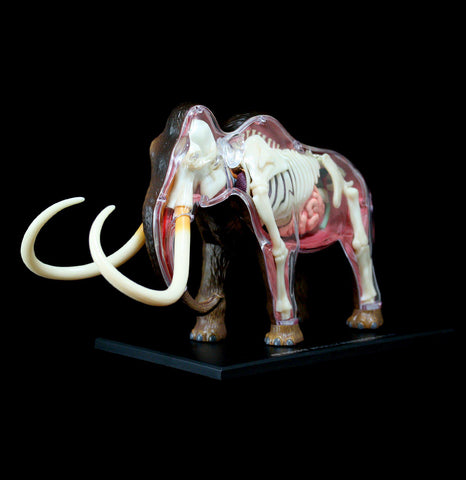 4D Woolly Mammoth Model - PaxtonGate