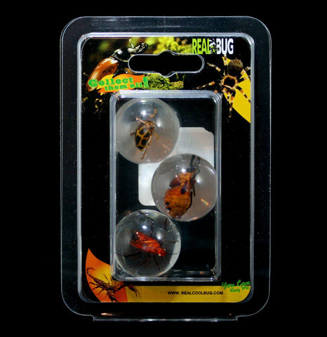 Three Piece Beetle Marble Set-Insects-Real Bug Company-PaxtonGate