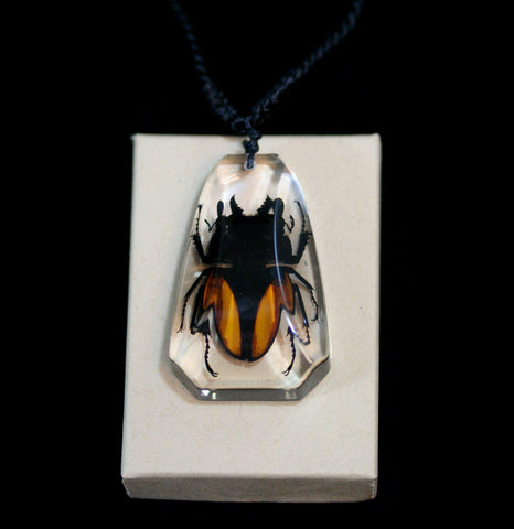 Stag Beetle Necklace-Insects-Real Insect Company-PaxtonGate