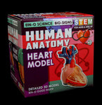 BioSigns Human Heart Model-Science-Tedco-PaxtonGate