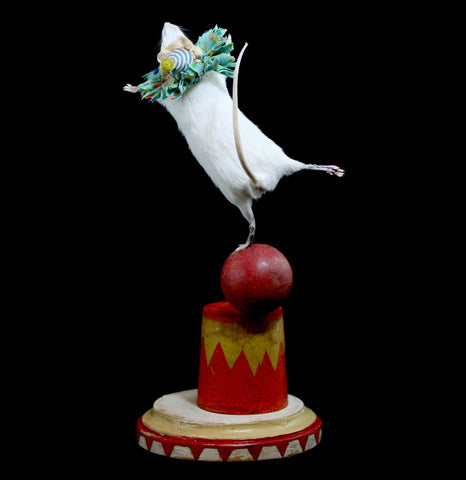 Taxidermy Circus Mouse-Taxidermy-Fool Crow-PaxtonGate