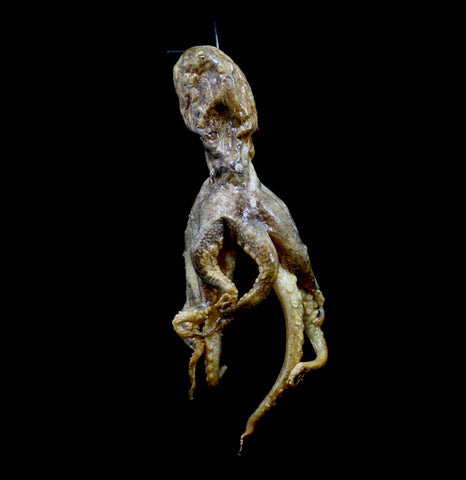 Hanging Octopus-Taxidermy-Scientific Woman-PaxtonGate