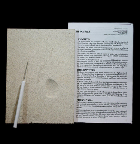 Fossil Preparation Kit-Fossils-Paxton Gate-PaxtonGate