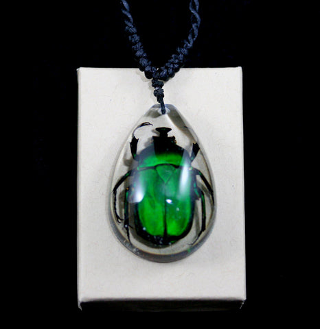 Rose Chafer Beetle Necklace-Necklaces-Real Insect Company-PaxtonGate