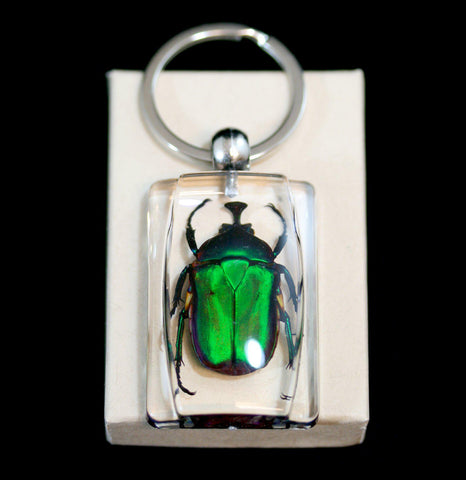 Green Rose Chafer Beetle Keychain-Insects-Real Insect Company-PaxtonGate