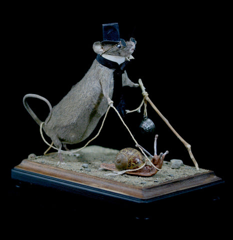 Blind Taxidermy Mouse-Taxidermy-Vicki Nelson-PaxtonGate