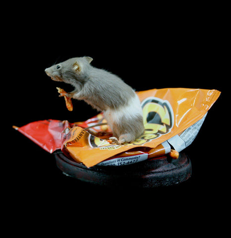 Cheeto Snacks Taxidermy Mouse-Taxidermy-Vicki Nelson-PaxtonGate