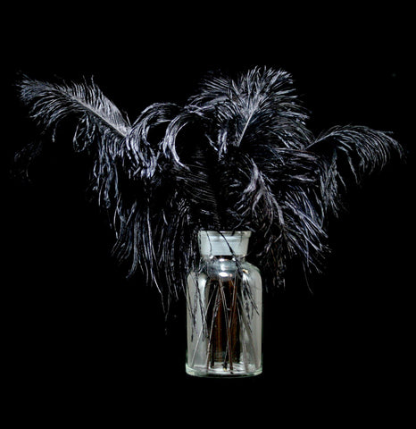 Ostrich Tail Feather-BonesMisc-Moonlight Feather-PaxtonGate