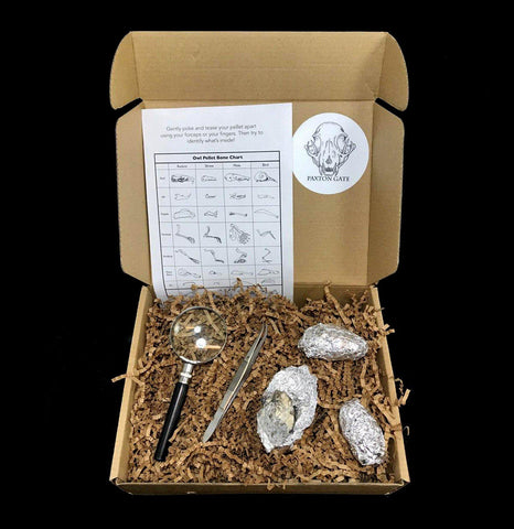 Owl Pellet Dissection Kit-Science-Paxton Gate-PaxtonGate