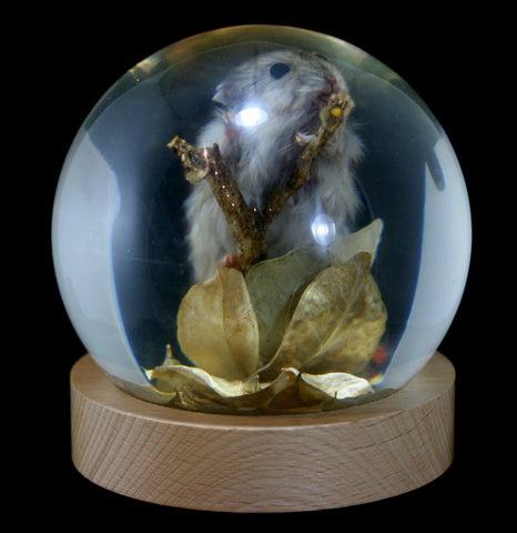 Mouse In Acrylic Globe-Taxidermy-Real Bug Company-PaxtonGate