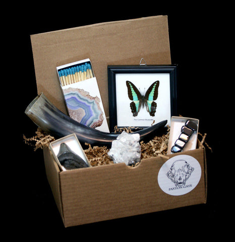 Treasure Box 6 Month Subscription-Paxton Gate-PaxtonGate