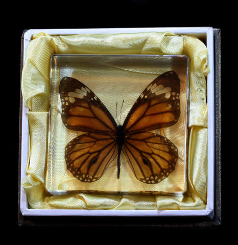 Tiger Butterfly Acrylic Paperweight - PaxtonGate