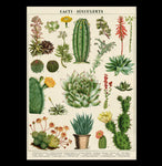 Cacti & Succulents Poster Wrap - PaxtonGate