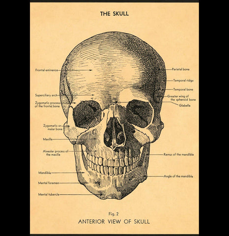 The Skull Poster Wrap - PaxtonGate