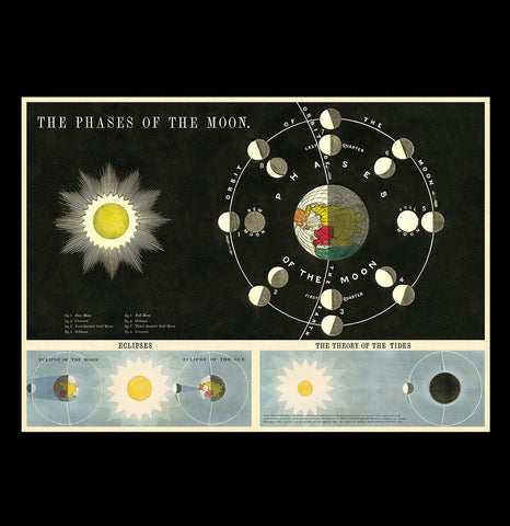 Phases of the Moon - PaxtonGate