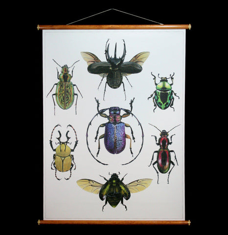 Beetles Wall Chart-2D-Thicket Sundries-PaxtonGate