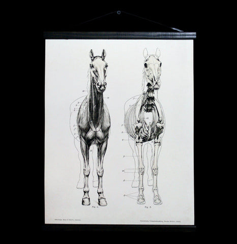 Horse Skeleton Hanging Canvas Chart-2D-Curious Prints-PaxtonGate