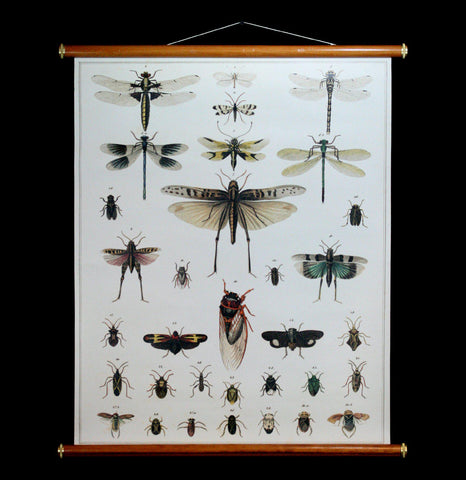 Dragonflies Wall Chart-2D-Thicket Sundries-PaxtonGate