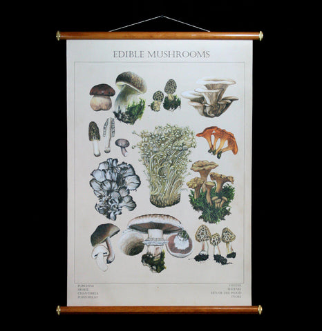 Edible Mushrooms Wall Chart-2D-Thicket Sundries-PaxtonGate
