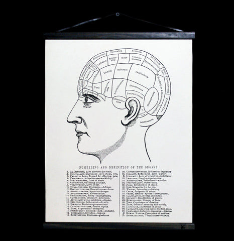 Phrenology Hanging Canvas Chart-2D-Curious Prints-PaxtonGate
