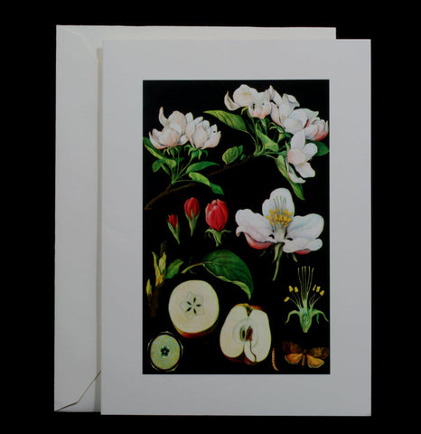 Botanical Apple Greeting Card - PaxtonGate