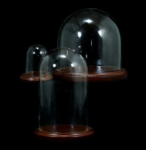 Glass Cloche With Walnut Base - PaxtonGate