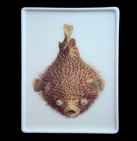 Blowfish Mini Trinket Tray-Kitchen-Why Girls Go Astray-PaxtonGate