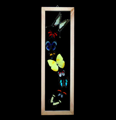 Vertical Butterfly Collection-Insects-Butterflies By God-PaxtonGate